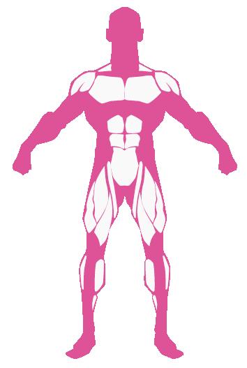 Piernas abdomen pectoral hombros